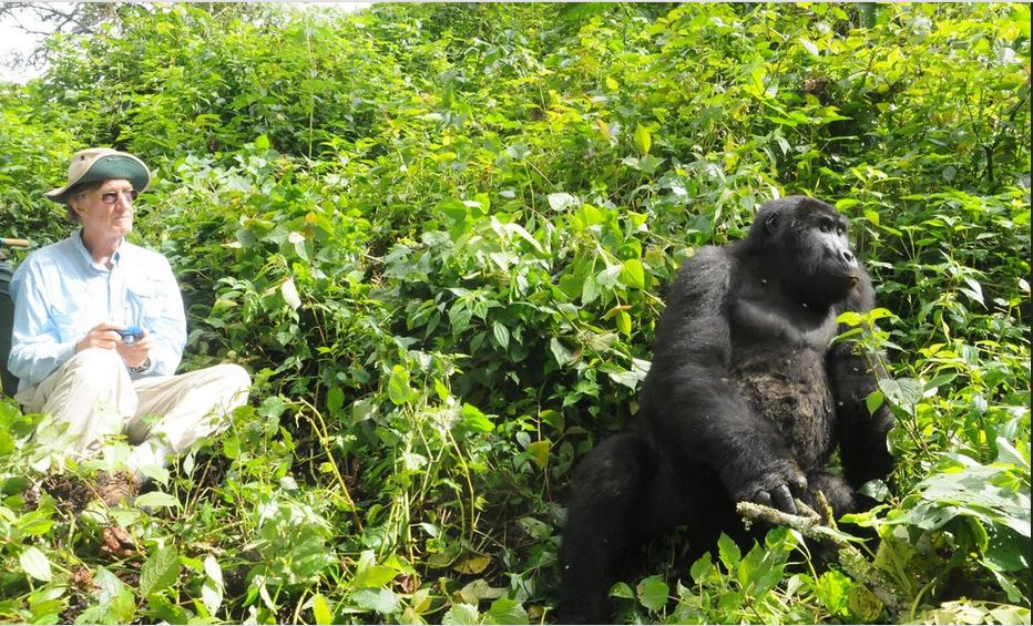 gorilla rw