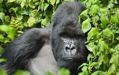 10 Days Uganda Wildlife Safari
