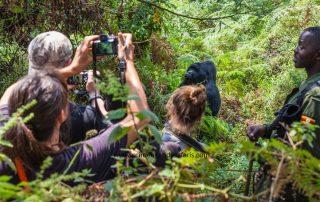 https://primeugandasafaris.blogspot.com/2019/05/best-time-for-uganda-gorilla-trekking.html
