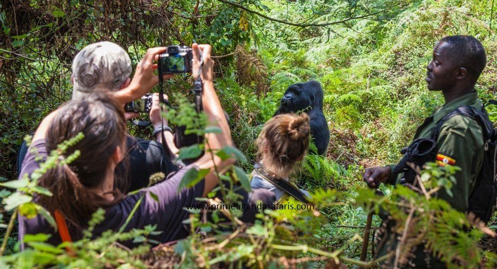 Mgahinga Gorilla National Park Uganda came world's 3rd best must photograph travel destination