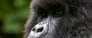 Uganda Self Drive Gorilla safari 8 days