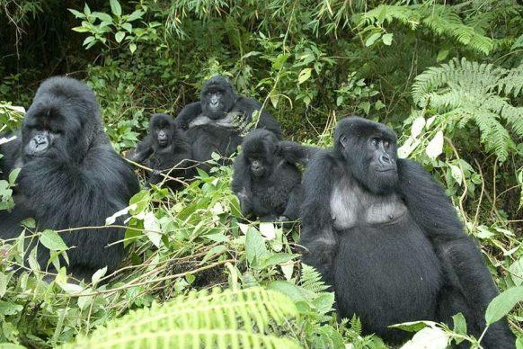 6 days gorilla tracking and wildlife safari uganda tour