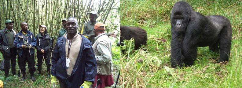 gorilla-trekking-in-volcanoes-rwanda