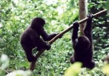 gorilla-trekking-permits