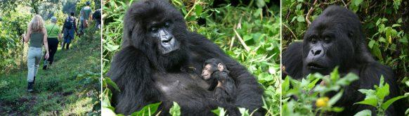 gorilla-trekking-uganda