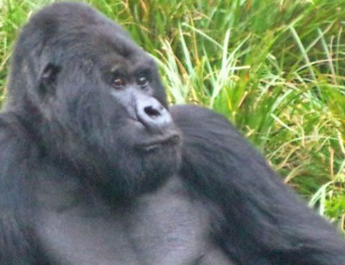 Rwanda Uganda Safari Holiday