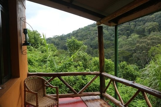 gorilla-valley-lodge-room view