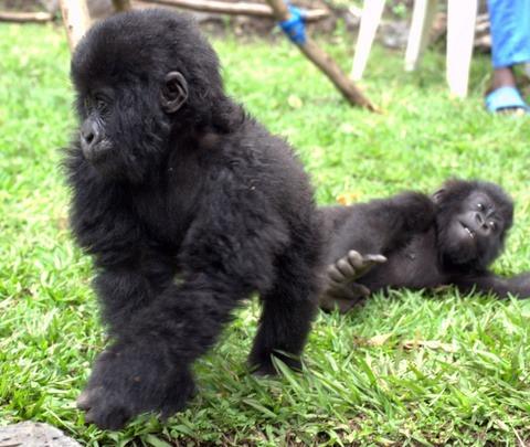 3 Day Uganda Gorilla Tour
