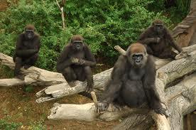 uganda rwanda tourist attractions