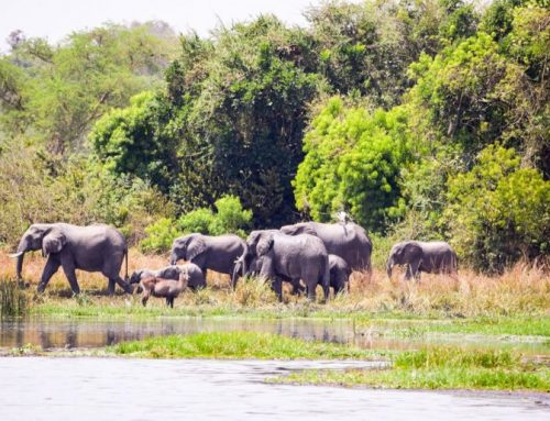 Karuma Wildlife Game Reserve Uganda