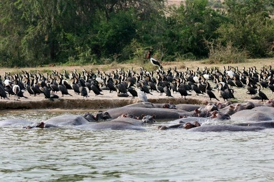 18 Days Africa Adventure Vacation Safari Holiday in Uganda with Ssese Islands
