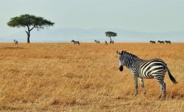 Long Kenya Safari Tours