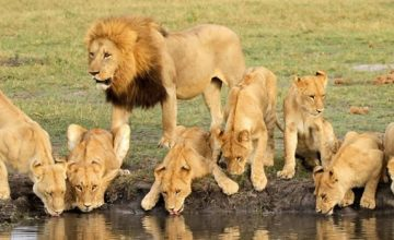 Short Kenya Safari Tours