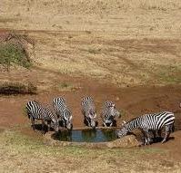wildlife at kidepo valley np