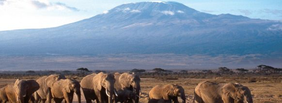 Long Tanzania Safari Tours