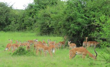 Short Uganda Safari to Lake Mburo National Park 2 Days