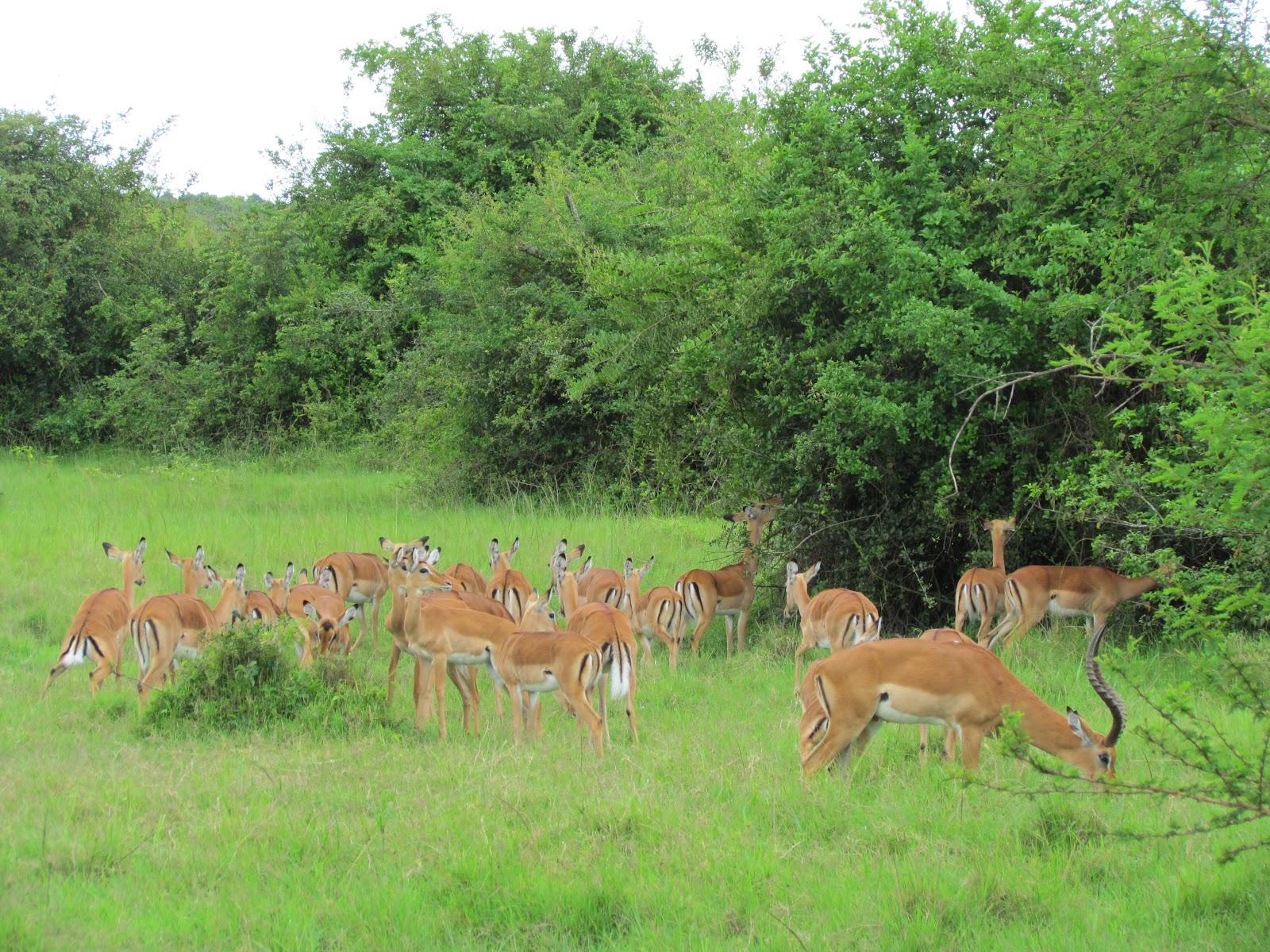 lake-mburo-national-park