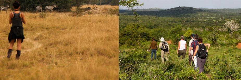 lake mburo game walking uganda safari