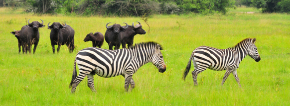 lake-mburo-walking-safari