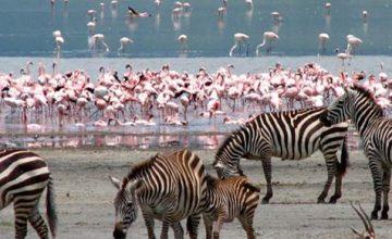 Kenya National Parks kenya safari