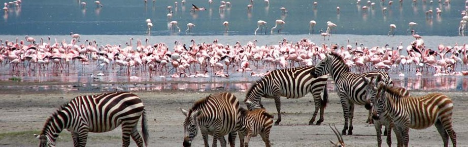 lake nakuru kenya safari tours