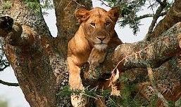 2 Days Queen Elizabeth National Park Safari