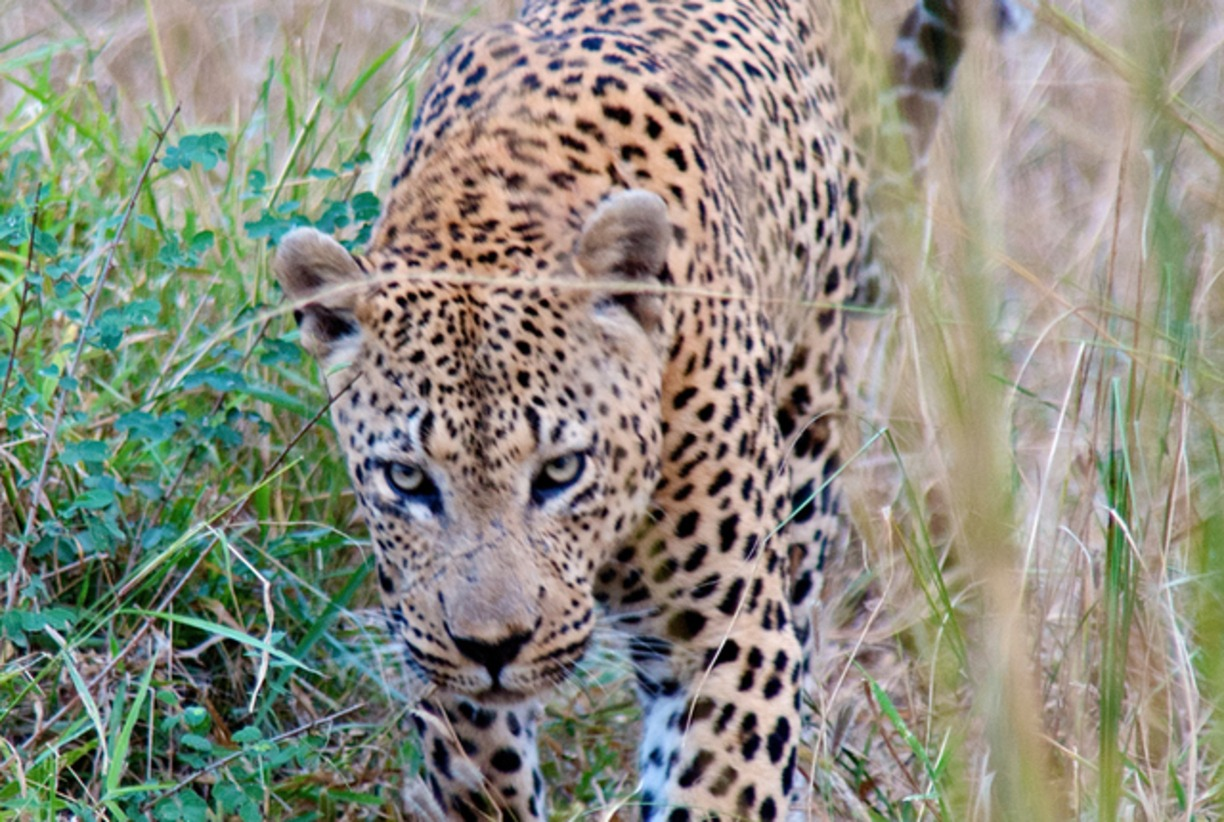 South Africa's big five private Game Reserve -Mala Mala Game Reserve- South Africa safari news