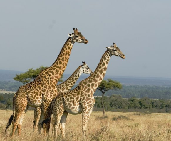 3 Days Kidepo Valley National Park Fly In Safari Uganda Tour