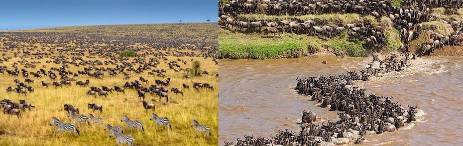 8 Days Kenya Safari Itinerary, Wildlife Viewing & Recreation Safari in Kenya