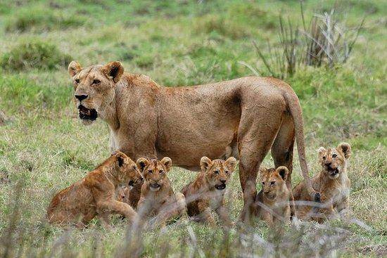 4 Days Kidepo Valley National Park Safari Uganda Tour, 4 Day Kidepo National Park Safari