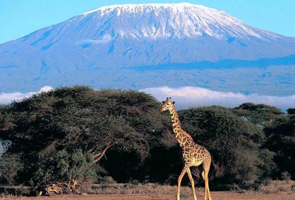 Mount Kilimanjaro National Park Tanzania