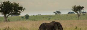 murchison falls National park , Uganda safaris