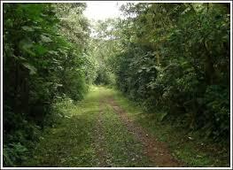 nature walk in Uganda