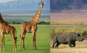 Tanzania National Parks wildlife safari