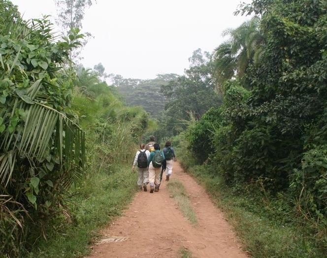 nkuringo walking encounter