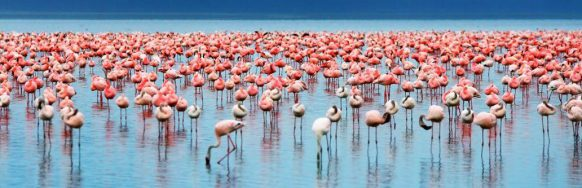 pink-flamingoe-lake-manyara