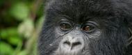 primate-safari