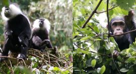 primates-nyungwe-forest-rwanda-tour
