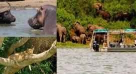 Why Visit Uganda-queen-elizabeth-big-five-uganda-safari