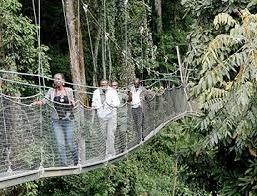 canopy walk nyumwe forest national park