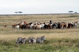 wildlife in rwanda