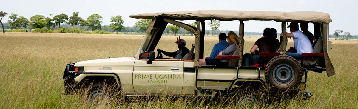 safari car