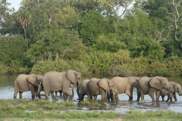 Selous Game Reserve; World's Largest Game Reserve -Tanzania Safari News