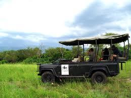 game drives in uganda national game parks