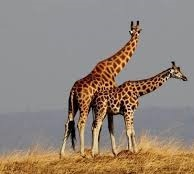 sex in the wild