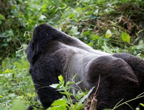 4 Days Uganda Gorilla Tour Bwindi Lake Bunyonyi Recreation