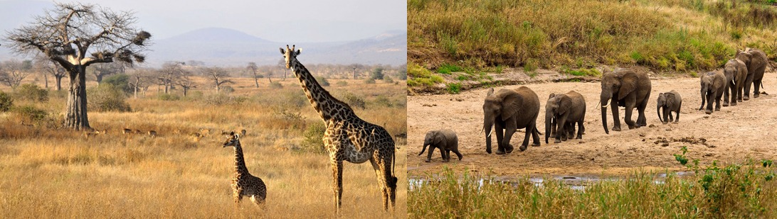 2 Days Tanzania Safari Tarangire National Park, 2 Day Tarangire National Park Safari
