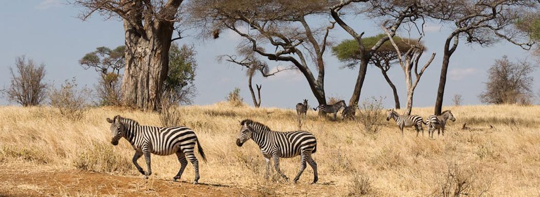 tarangire-np-east africa-safaris