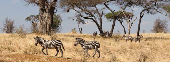 tarangire-np-east-africa-safaris tanzania tour
