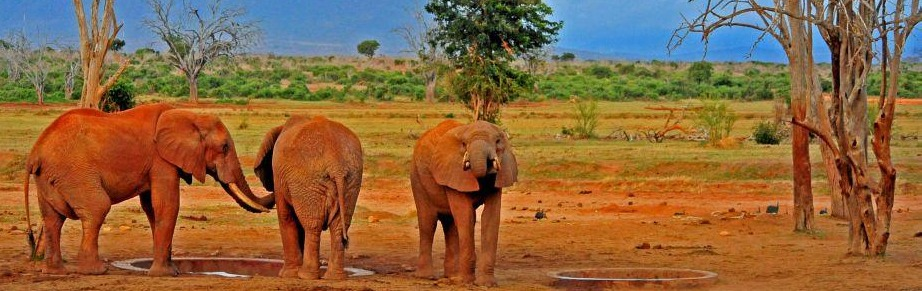 tsavo-national-park-kenya tours